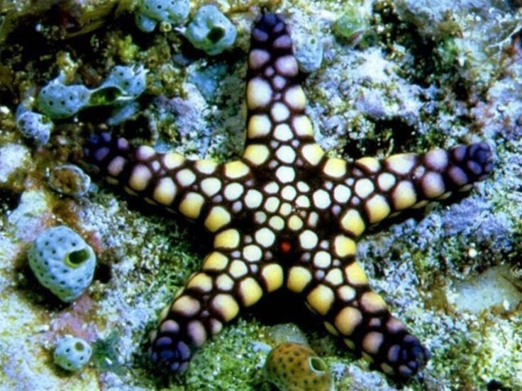 cool starfish Beachy Me Pinterest Beautiful Desktop 736x552