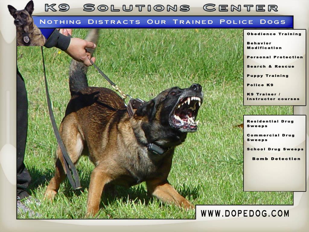 Downloads   K9 Solutions Center 1024x768