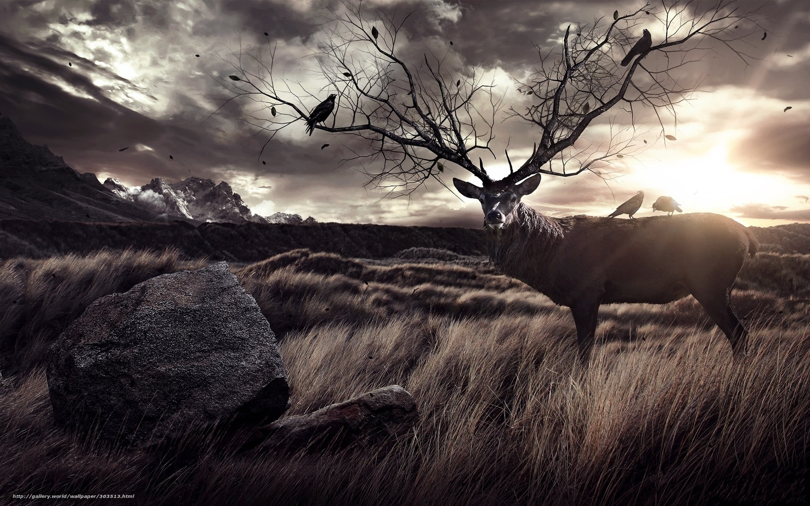 Download wallpaper Deer raven stone desktop wallpaper in the 1600x1000
