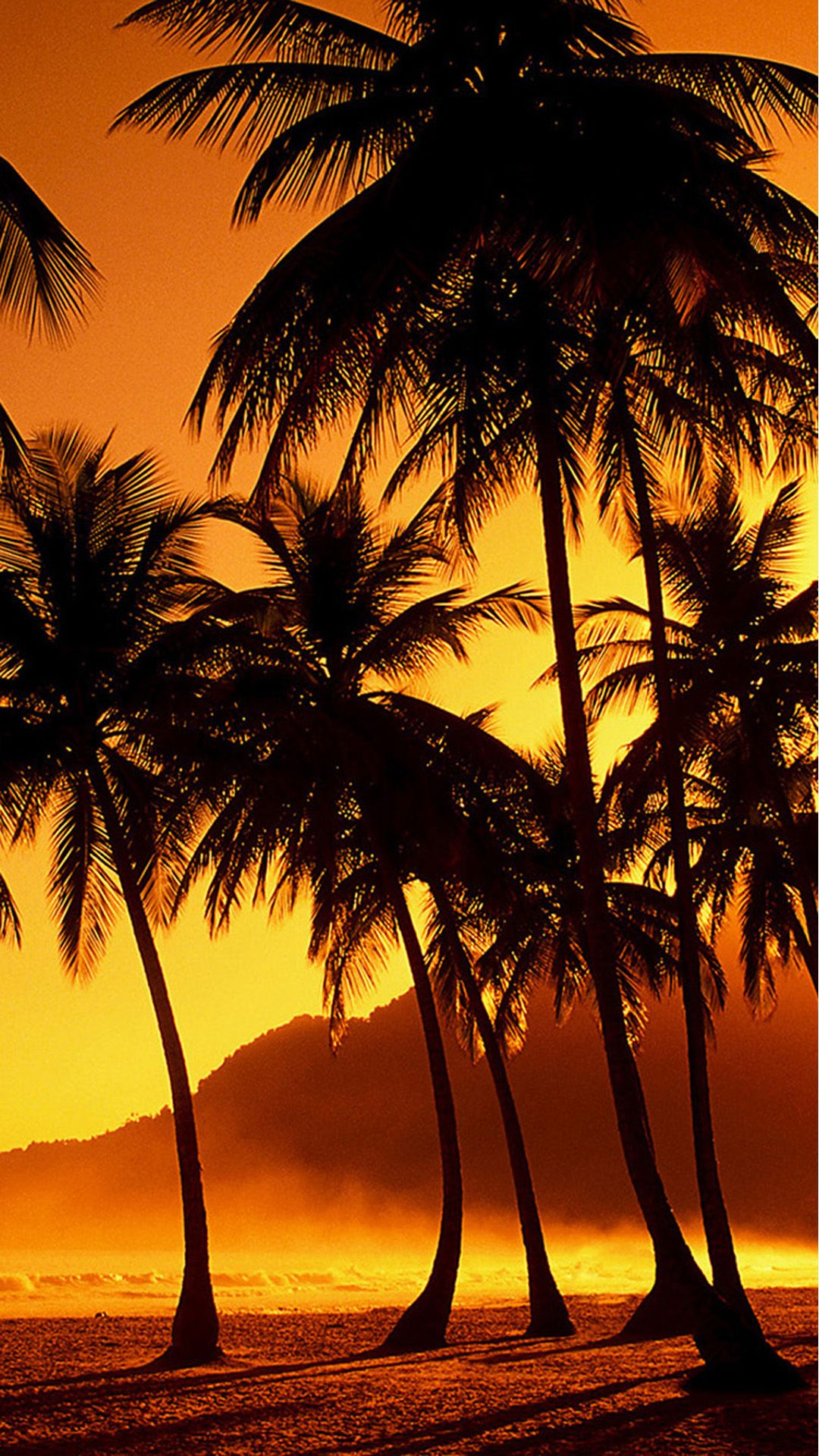 Nature Sunset Beach Coconut Grove iPhone 6 plus wallpaper 1080x1920