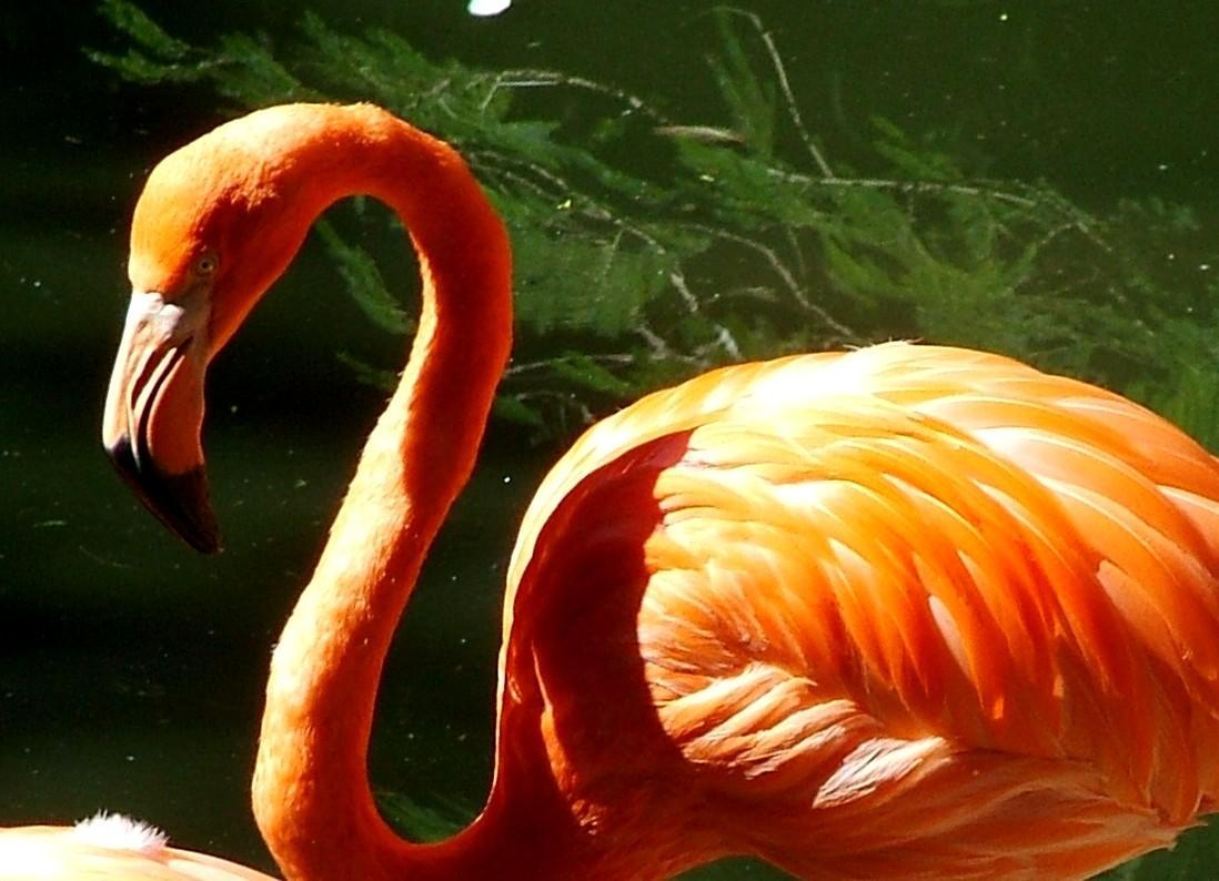 tropical birds wallpaper tropical birds 1098x794