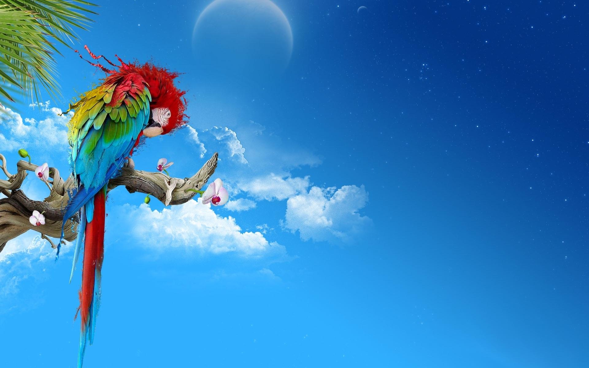 parrot desktop wallpaper 1920x1200