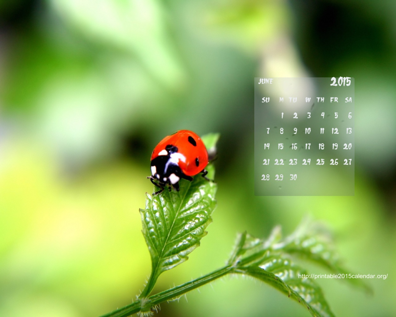2015 Calendar HD Wallpaper 2015 Calendar 1280x1024