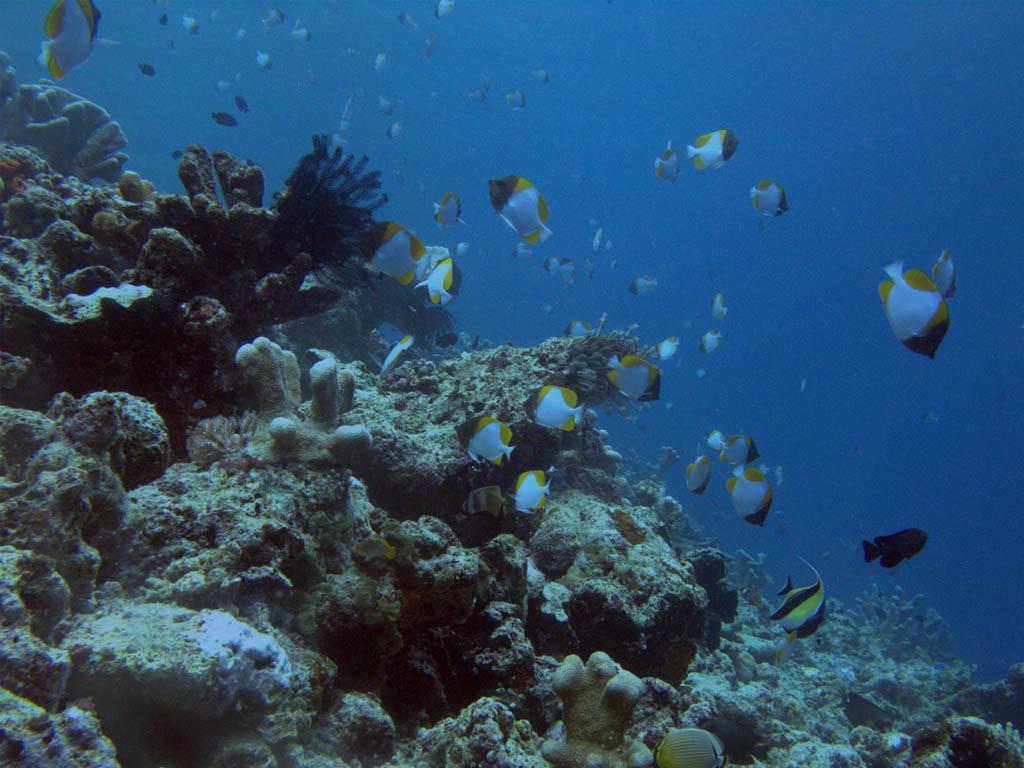 deep ocean desktop wallpaper - photo #43