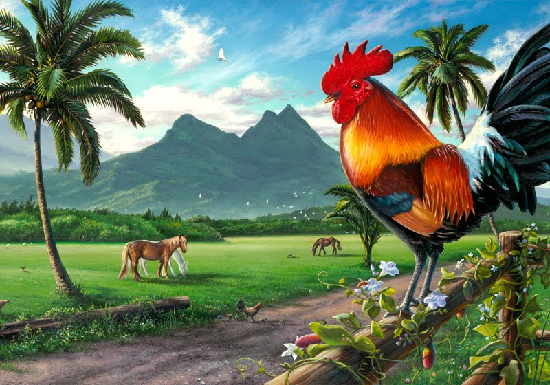 Wallpaper Collections rooster wallpaper 800x560