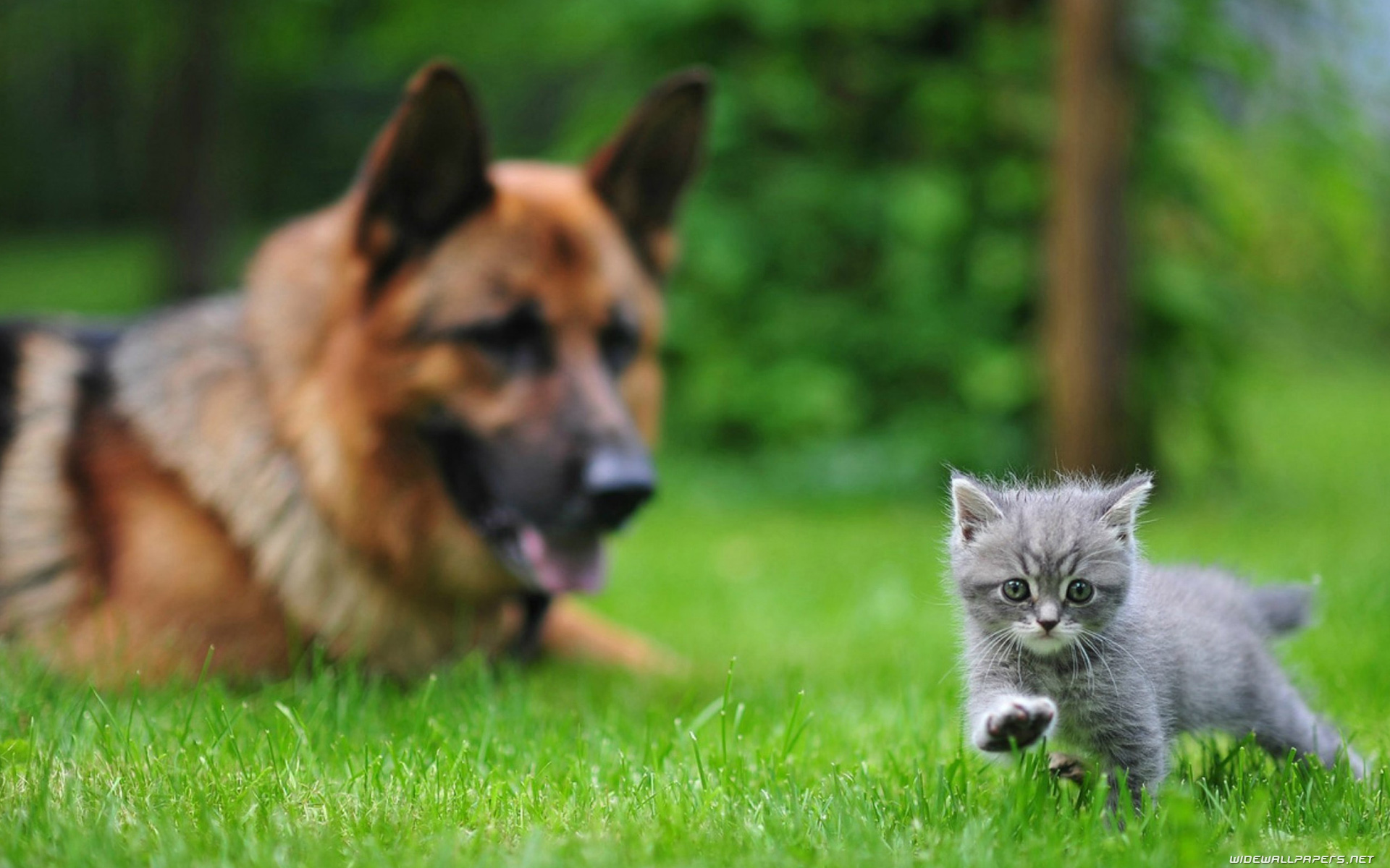Cats and Dogs desktop wallpapers HD and wide wallpapers 1920x1200
