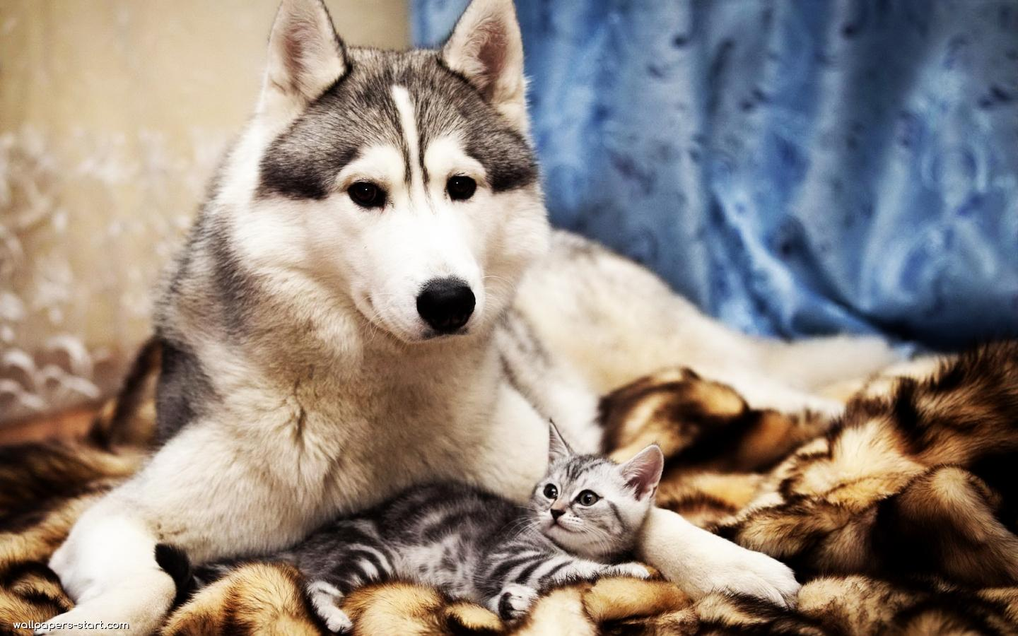Cats and Dogs Wallpapers Fun Animals Wiki Videos 1440x900