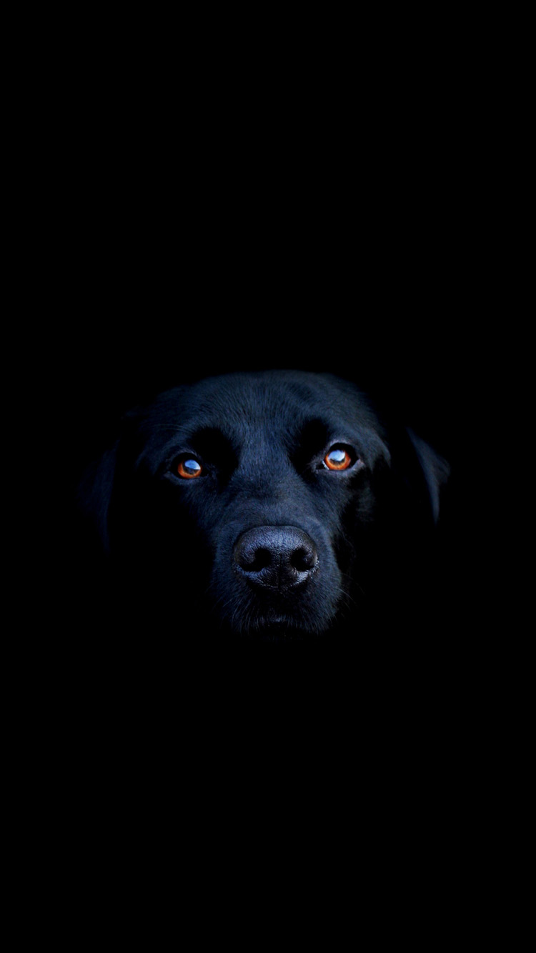 Black dog iPhone 6 Wallpapers HD iPhone 6 Wallpaper 750x1334