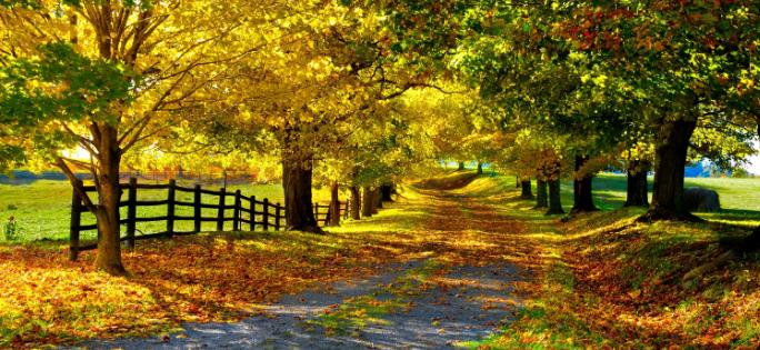 Download Autumn themes for Windows 7 [Desktop Fun] Pureinfotech 684x315