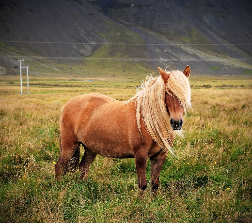 Horse Backgrounds for My Computer, wallpaper, Horse Backgrounds for My ...
