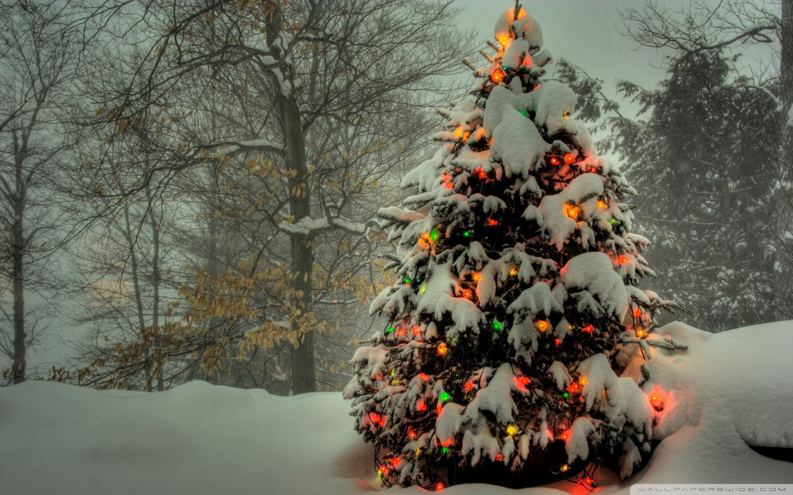 Awesome Galleries 33 Beautiful christmas tree Wallpaper 1600x1000