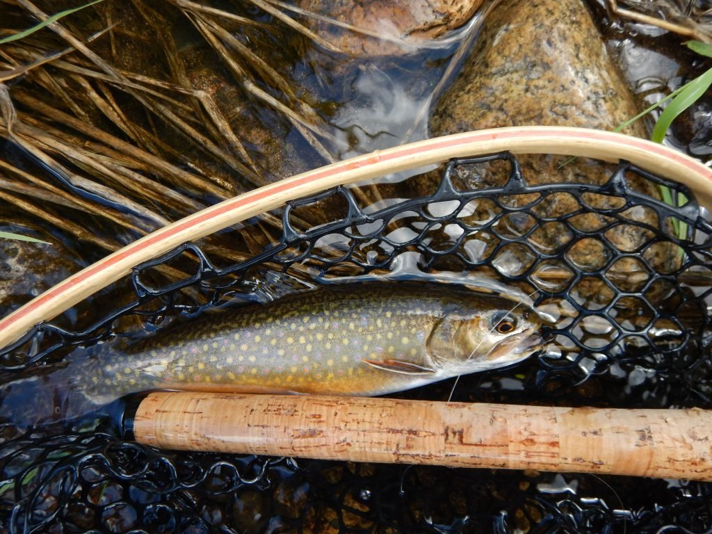Manitobas Wild Brook Trout   Tenkara Fly Fishing   Winnipeg Manitoba 1024x768