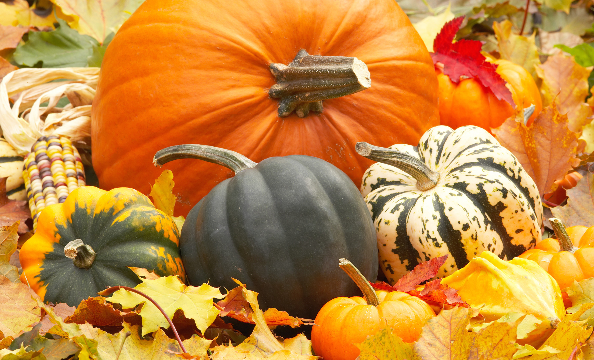 Fall Wallpaper Backgrounds With Pumpkins 55 images 2048x1242
