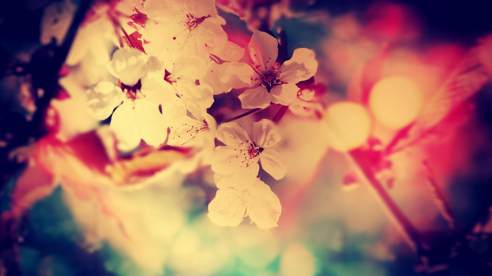 vintage flowers wallpapers categories nature wallpapers 1920x1080