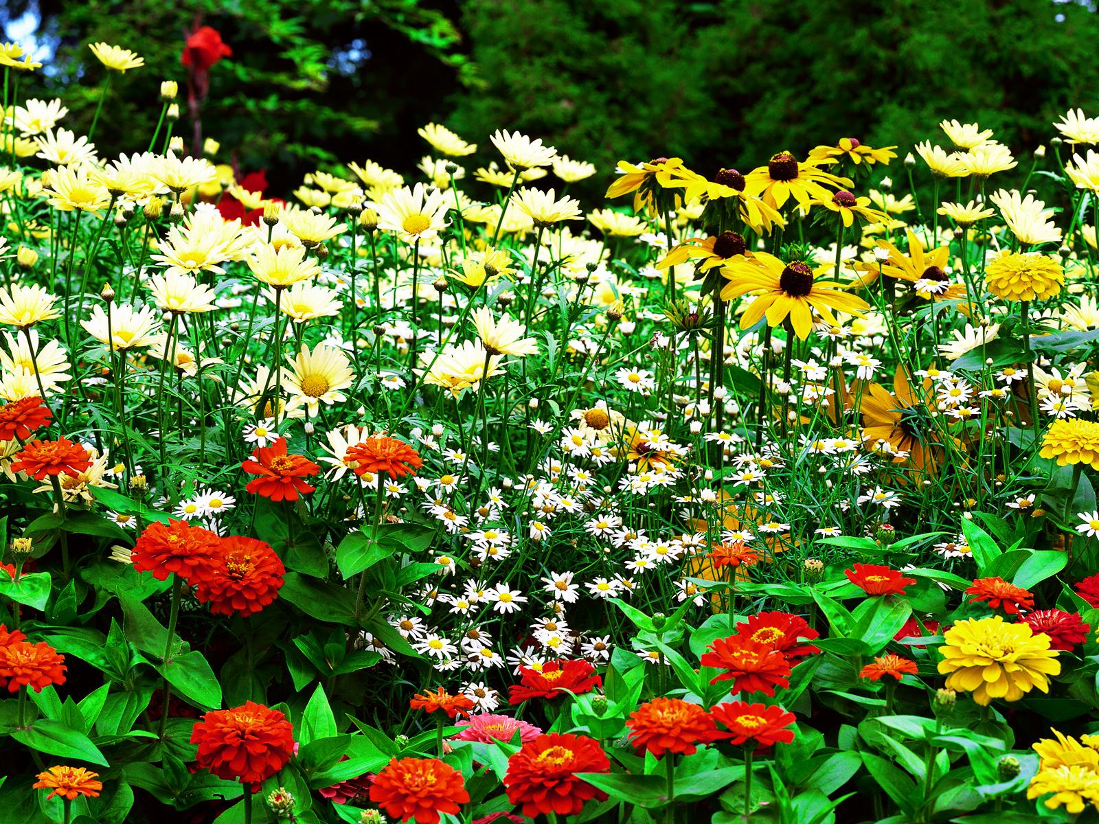 Wallpapers Dekstop U Flower Garden Wallpaper 1600x1200