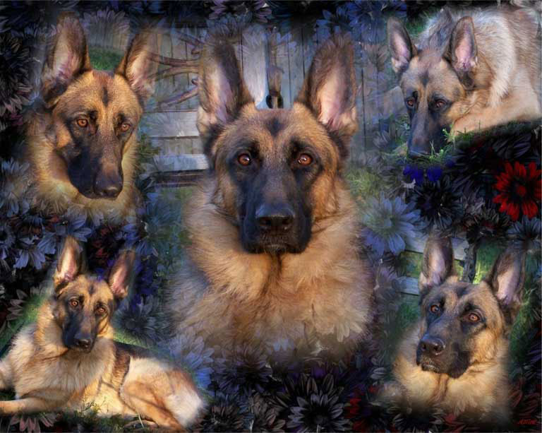 Return from GSD Wallpapers to German Shepherd Wallpapers 768x613