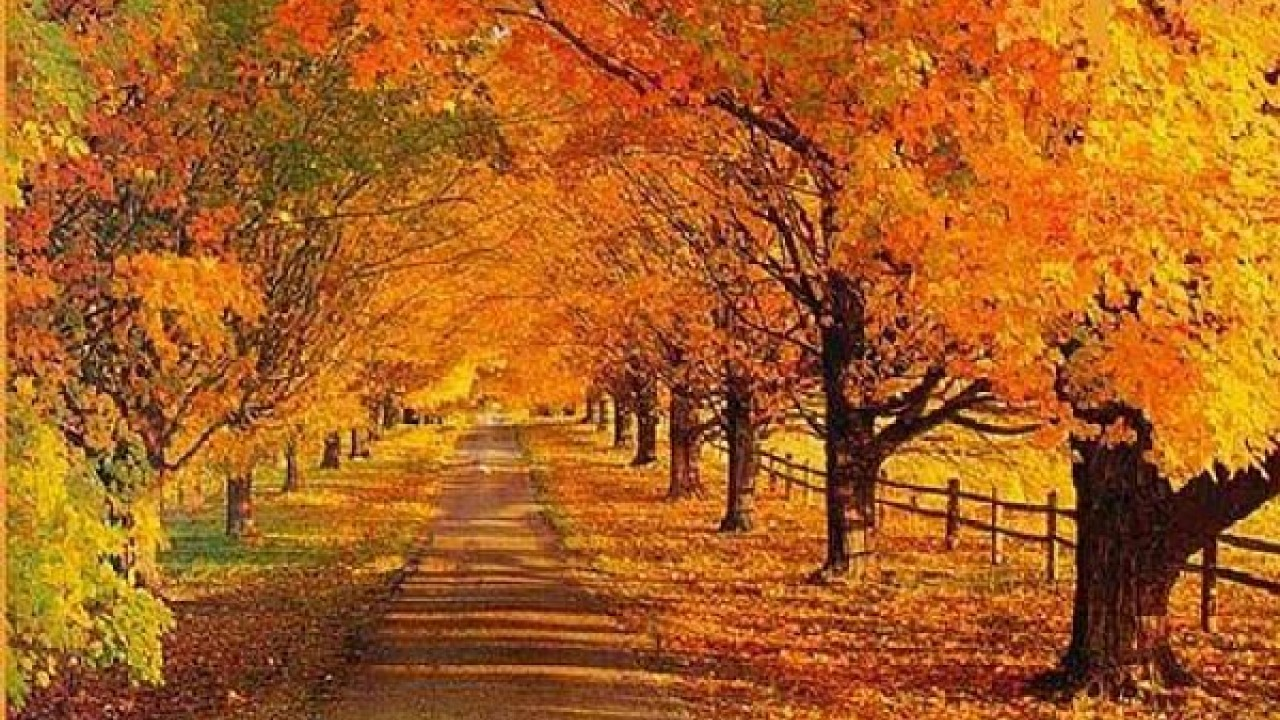 Free Download Fall Scene Wallpapers Free Wallpaper Desktop