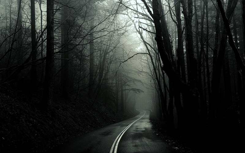 black and white trees dark forest roads monochrome 1920x1200 wallpaper 800x500