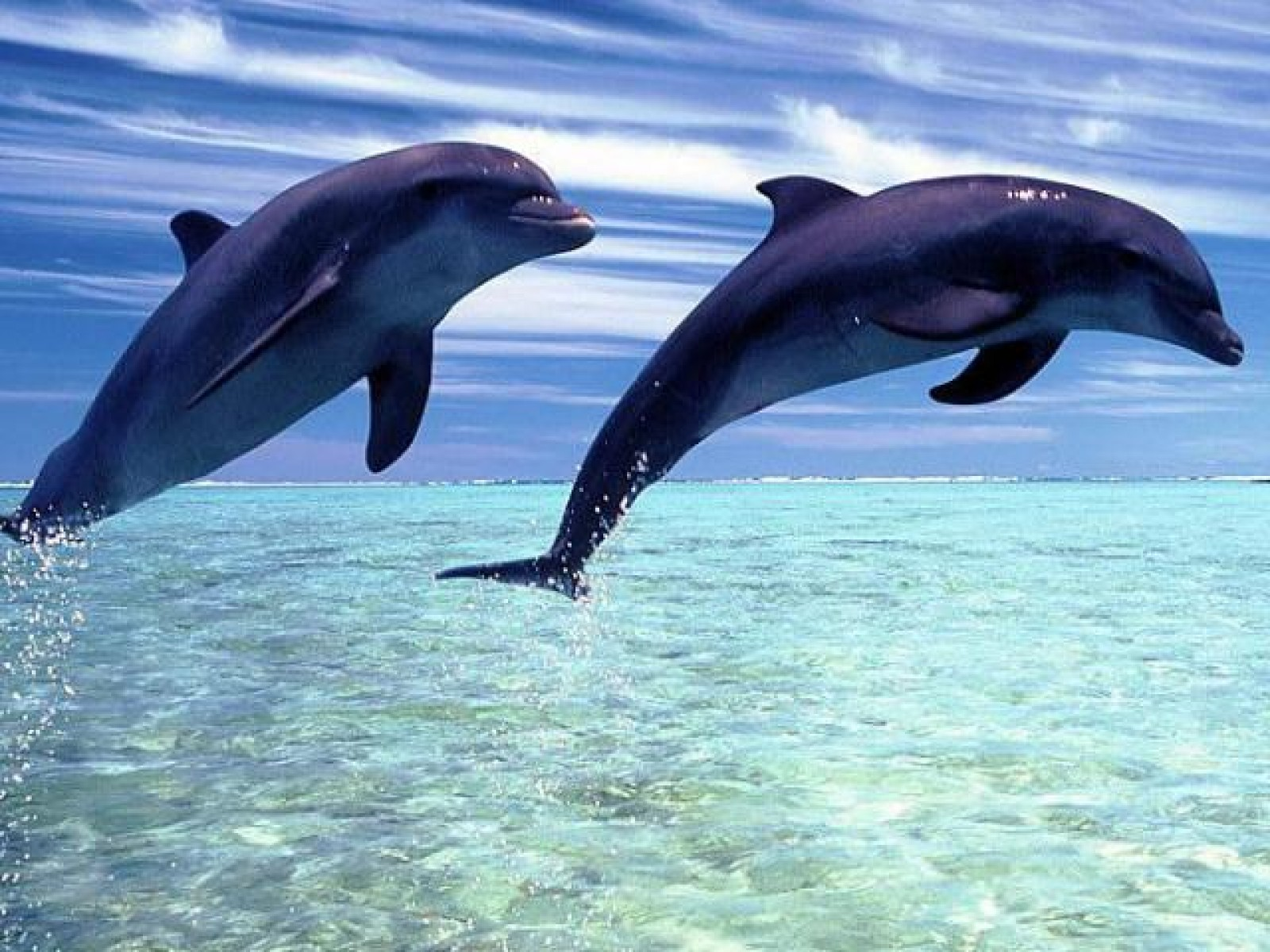 49+] Dolphin Browser Wallpaper on WallpaperSafari