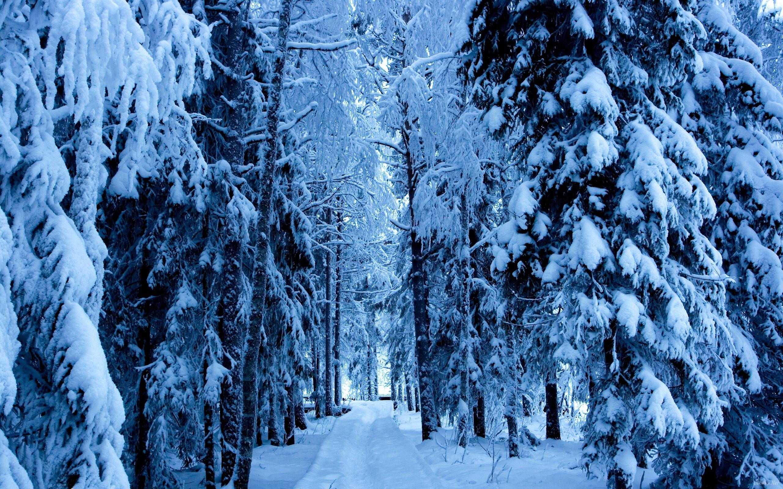 Winter snowy forest wallpaper HD Desktop Wallpaper 2560x1600