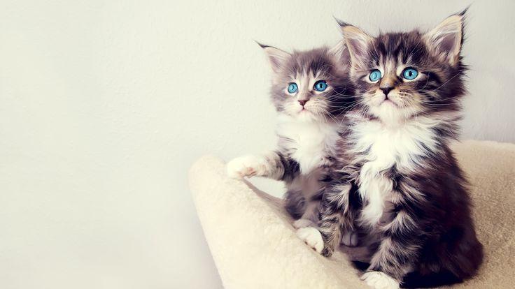 wwwwallpaperbodcomwallpapers201304Cute Cats Wide  1152x2048 736x414