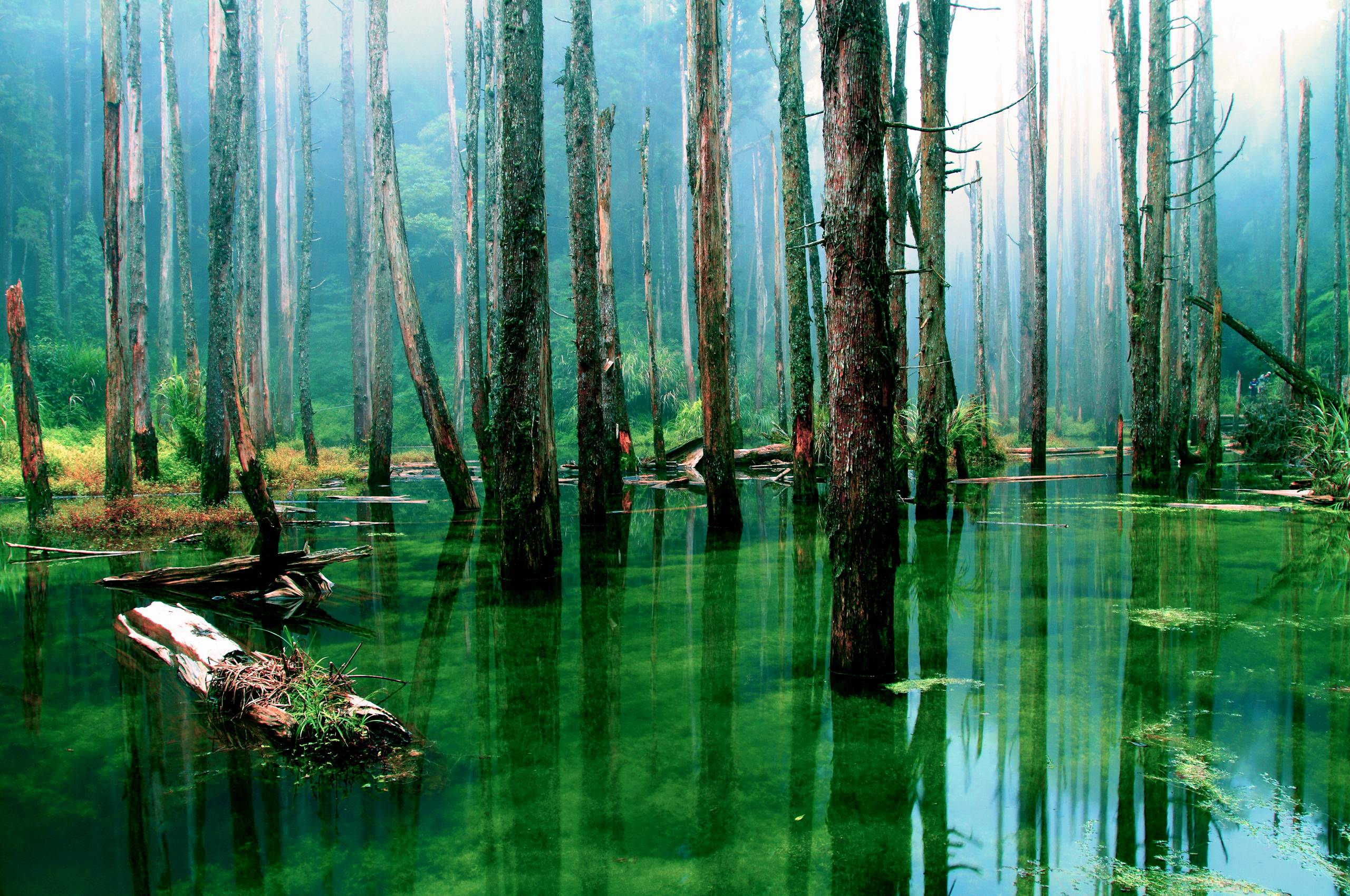 Swamp Backgrounds 2560x1700