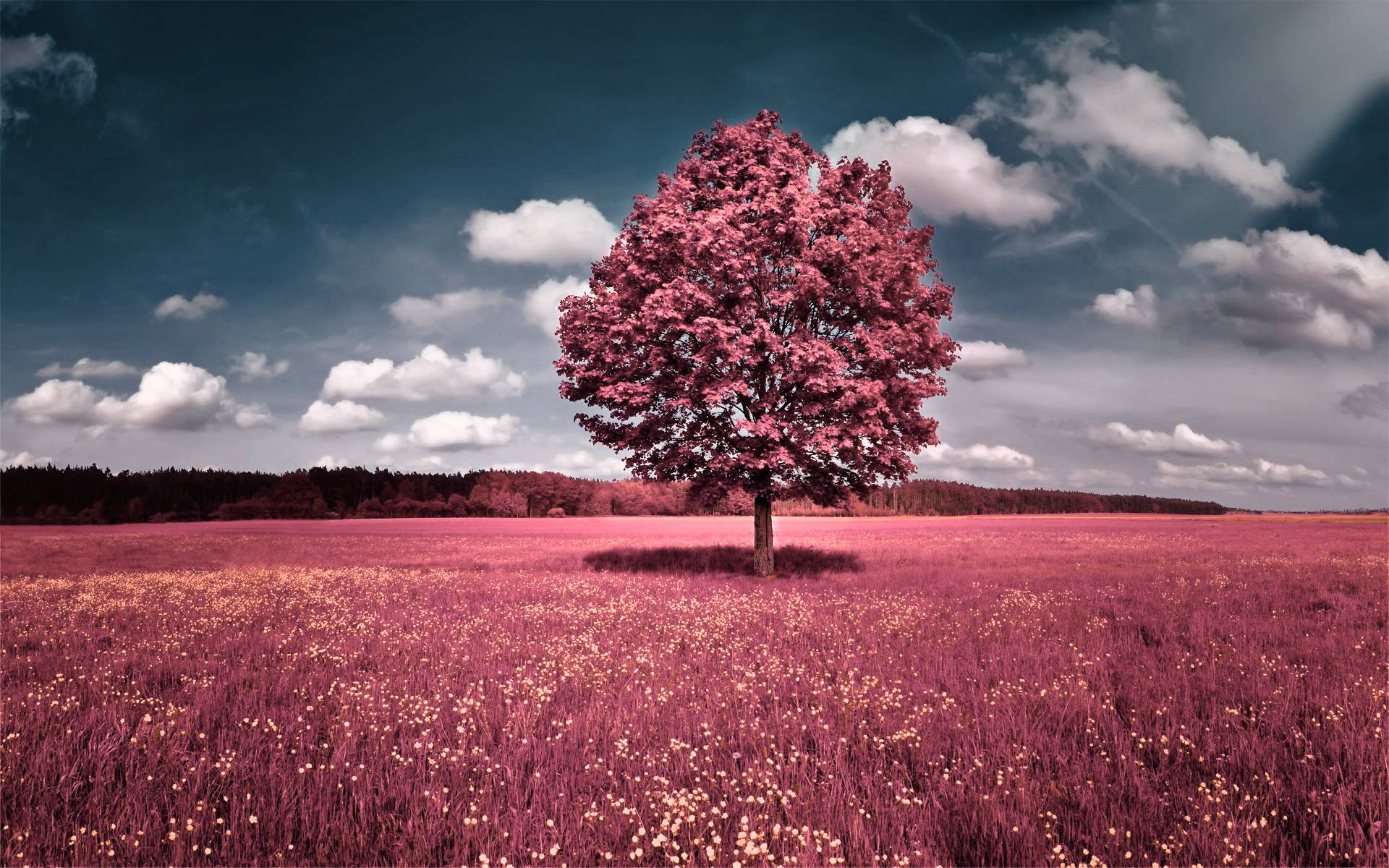 Pink Nature Wallpapers 1920x1200