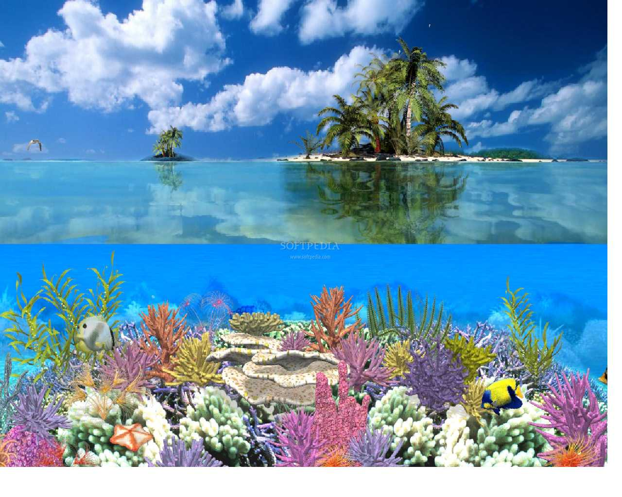 Coral Island   Animated Wallpaper   This is the image displayed by 1280x1024