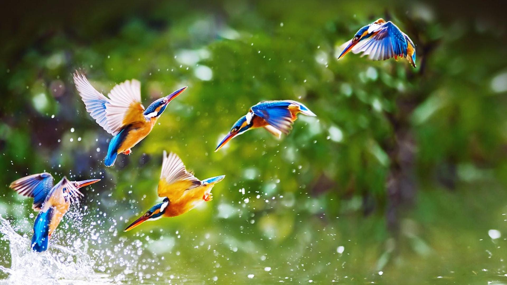 Hd wallpaper eagle - Birds Flying Wallpaper Wallpapersafari