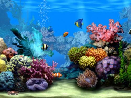 Download Aquarium 3D Live WallpaperAquarium 3D Live Wallpaper 205 500x375