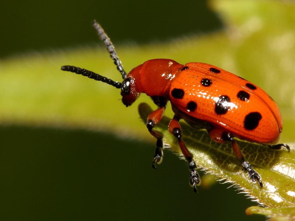 beetle wallpaper 1024x768