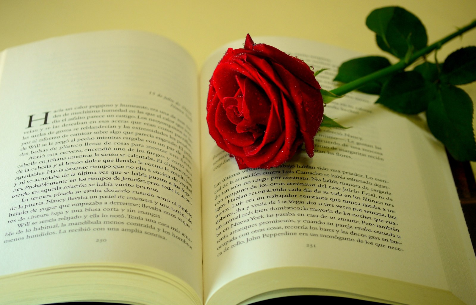 Book And Love Photos 1600×1026 | wallpapers55.com - Best Wallpapers ...