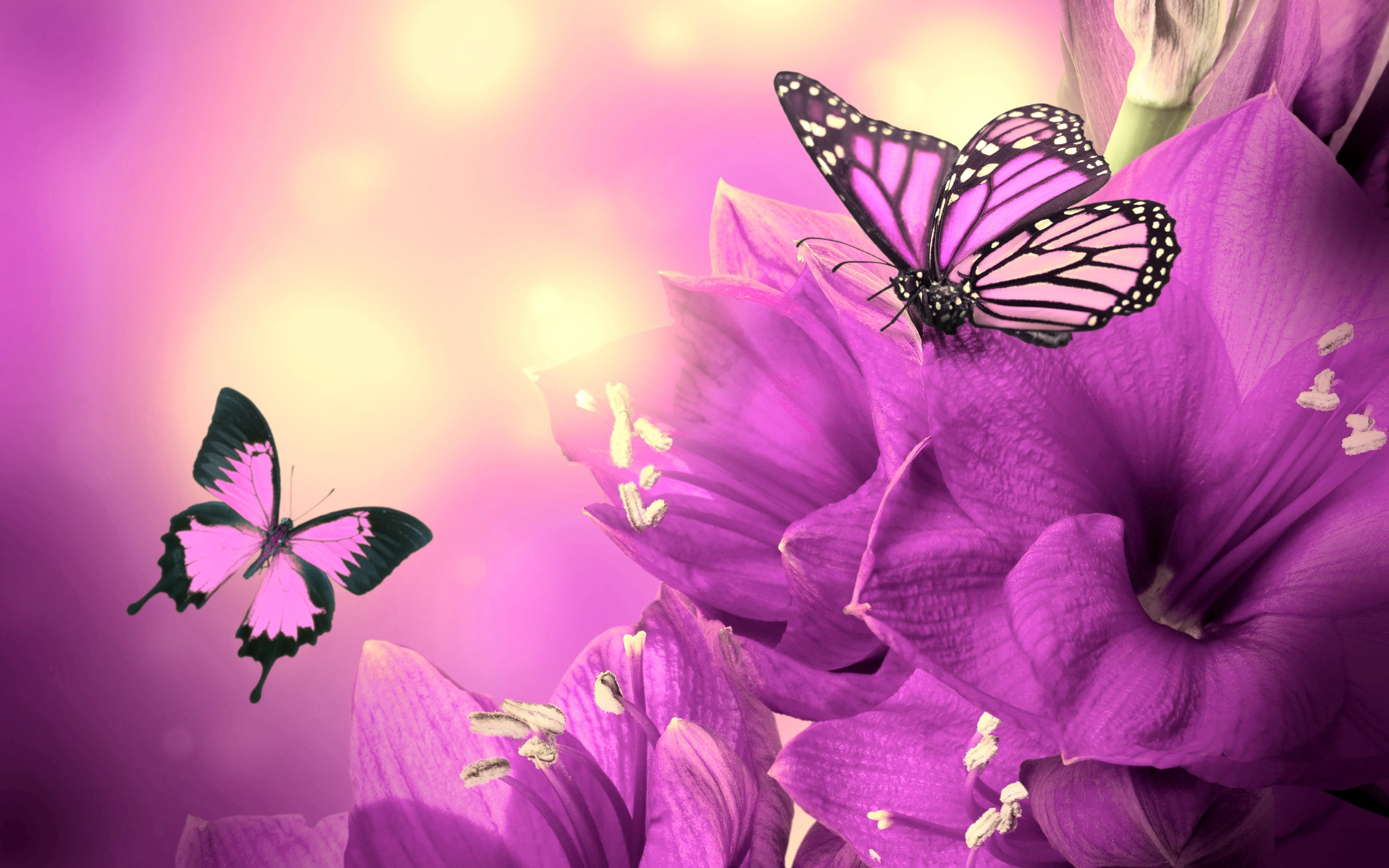 Purple Flowers Butterflies HD Wallpaper 2880x1800