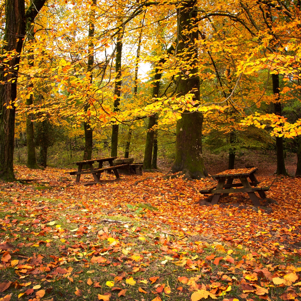 Autumn Leaves Falling Down iPad Wallpaper Download iPhone Wallpapers 1024x1024