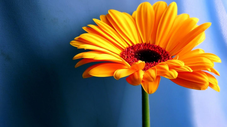 Free Flower Wallpaper For Desktop WallpaperSafari