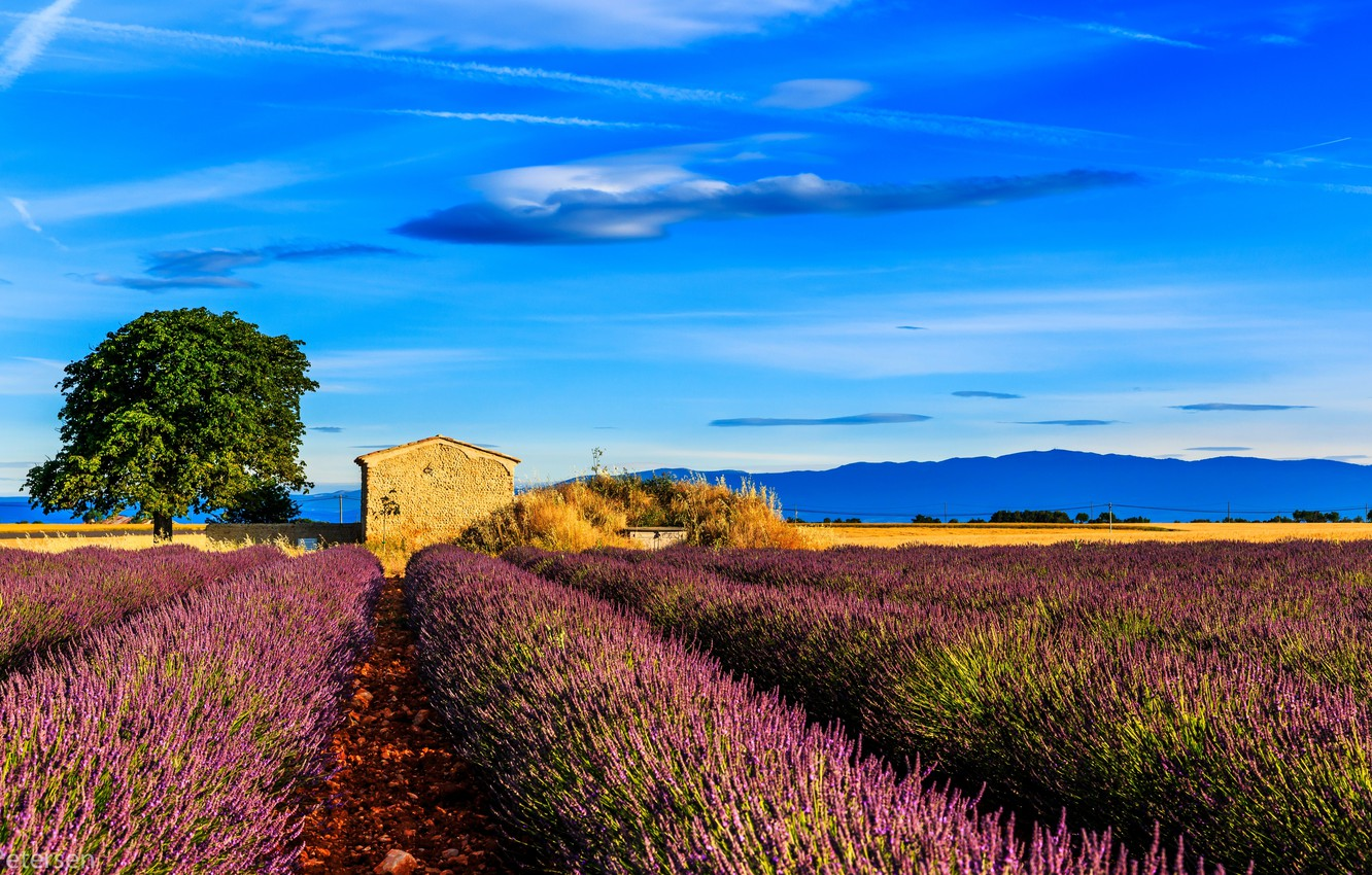 Wallpaper field tree France house lavender Provence Provence 1332x850