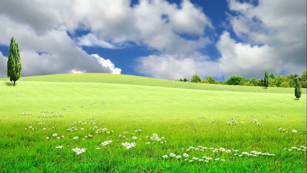 Beautiful Nature Nature Landscape Video Grass Field Background 1280x720