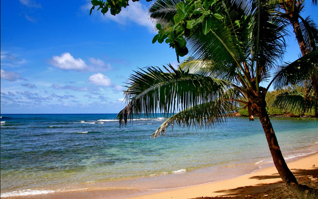 Beach Tree Wallpapers   5434 1024x640