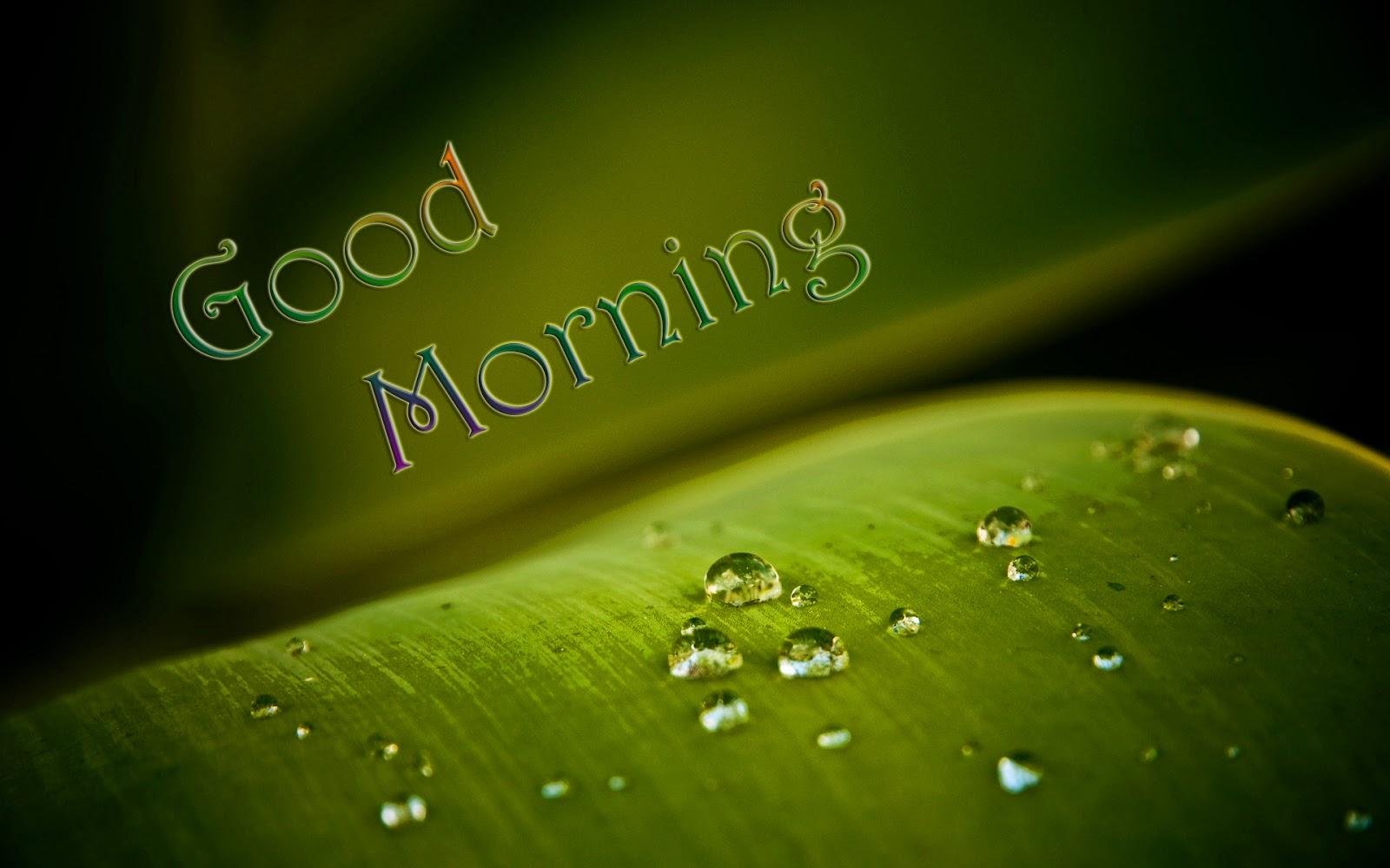 Hd wallpaper good morning - Wallpaper Good Morning