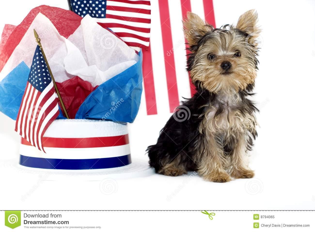 htm filesize x120 cute puppy desktop backgrounds 160 120 1300x960