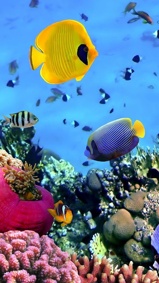 Ocean Fish Live Wallpaper   Android Apps on Google Play 506x900
