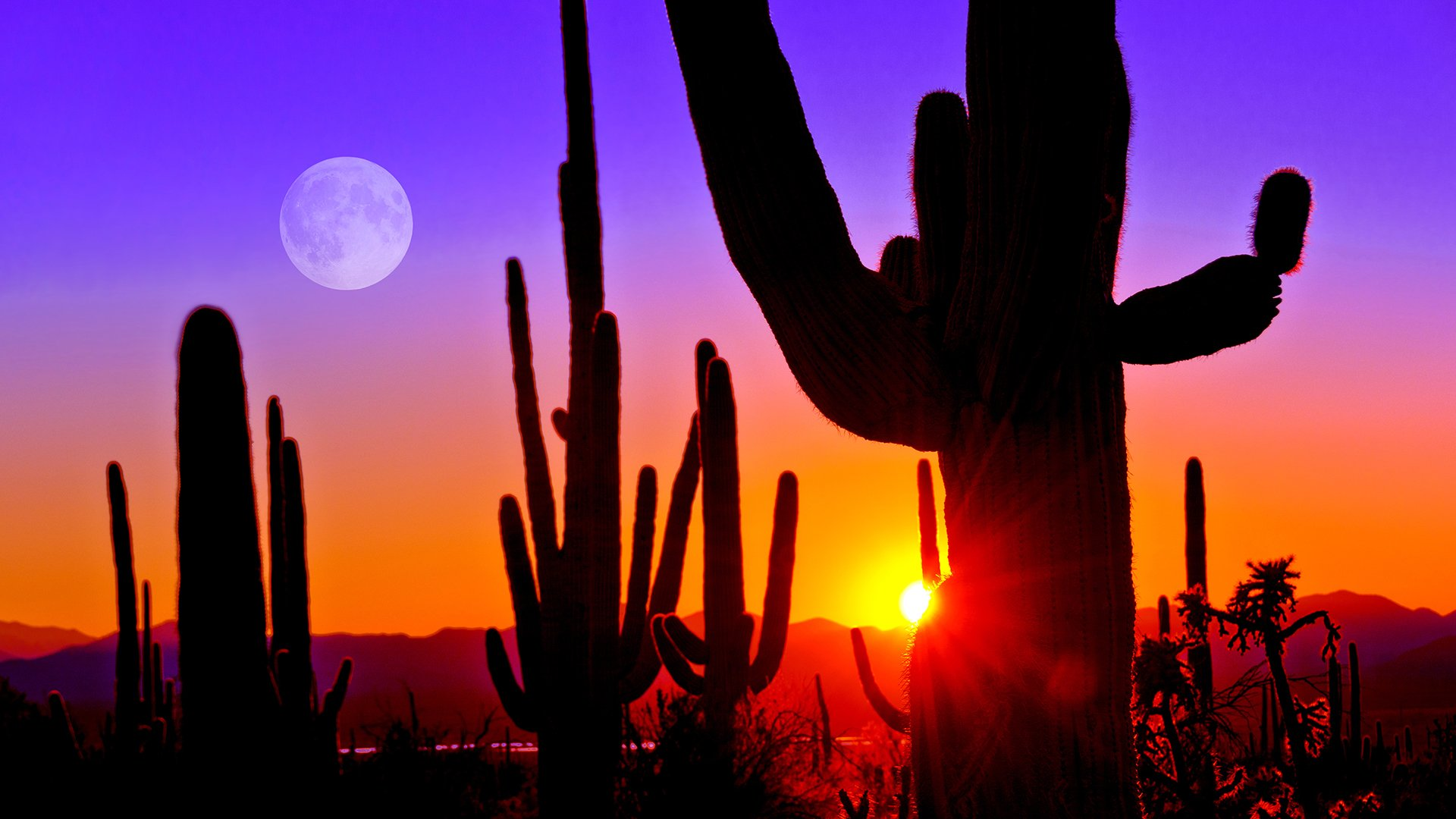 Sunset at Saguaro National Park near Tucson Arizona USA 1920x1080