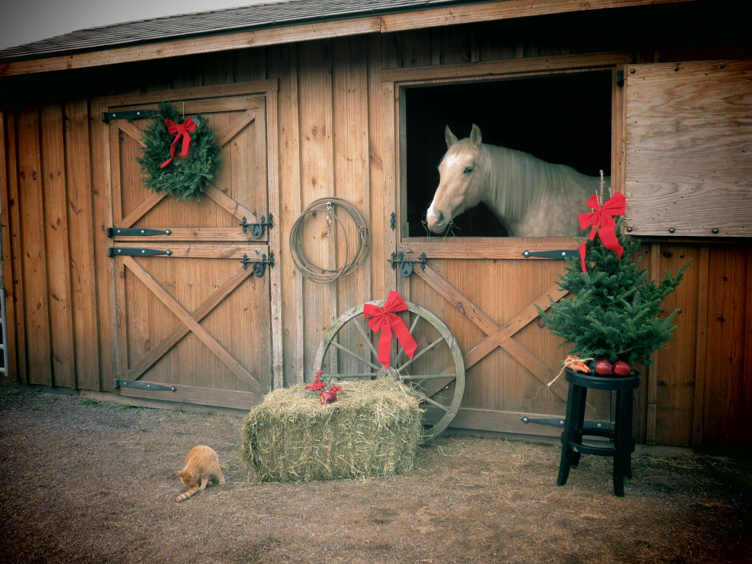 christmas horse wallpaper free