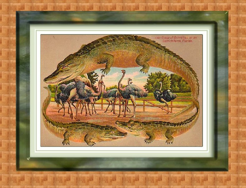 alligator grens 3 wallpaper   ForWallpapercom 789x605