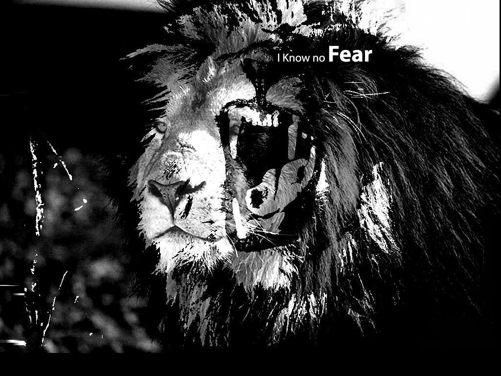 no fear wallpaper   ForWallpapercom 1024x768
