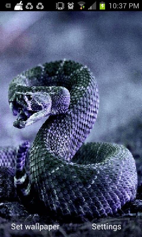 Cobra Snake Live Wallpaper Android