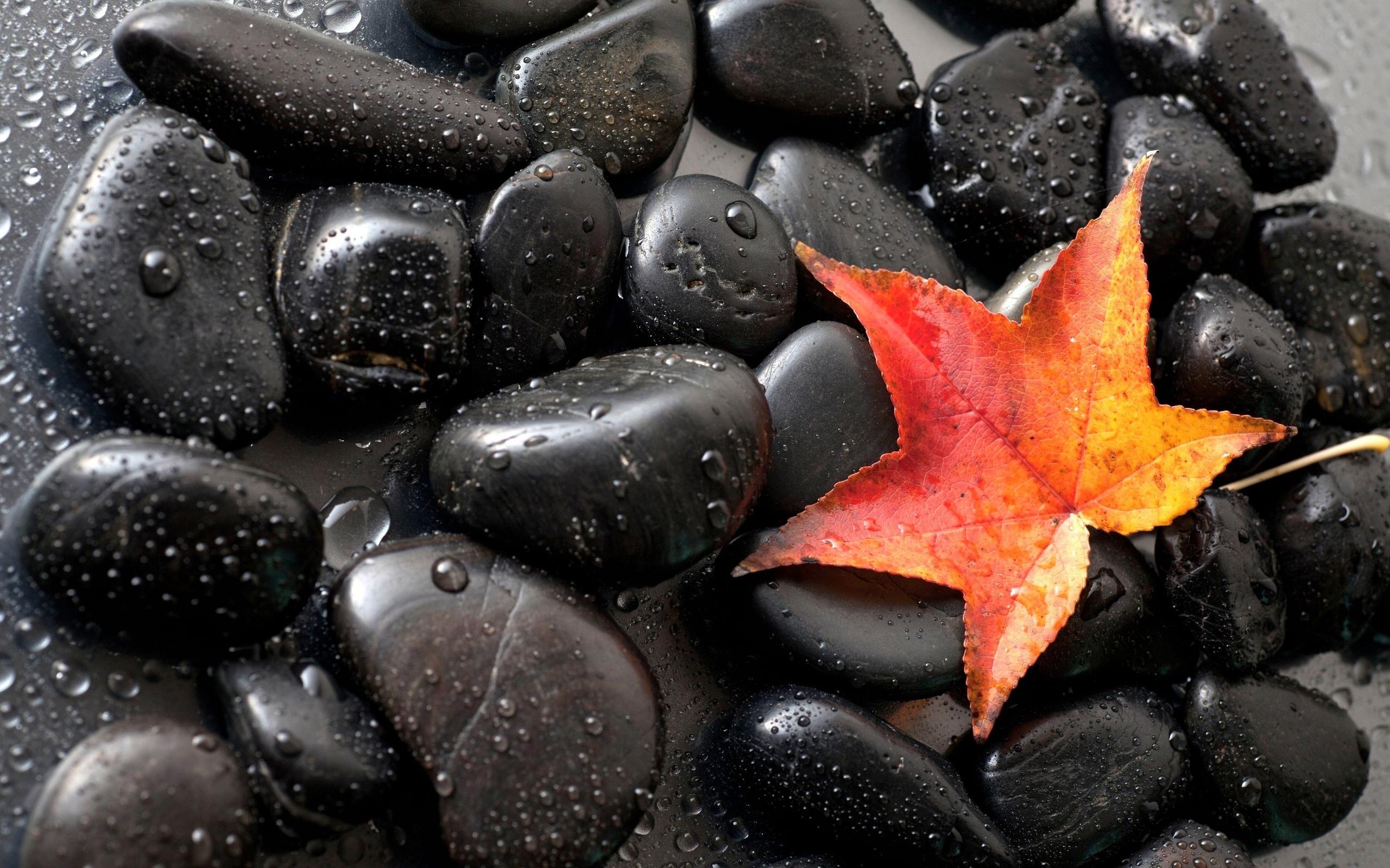 Камни черные цветок  № 2989414 без смс