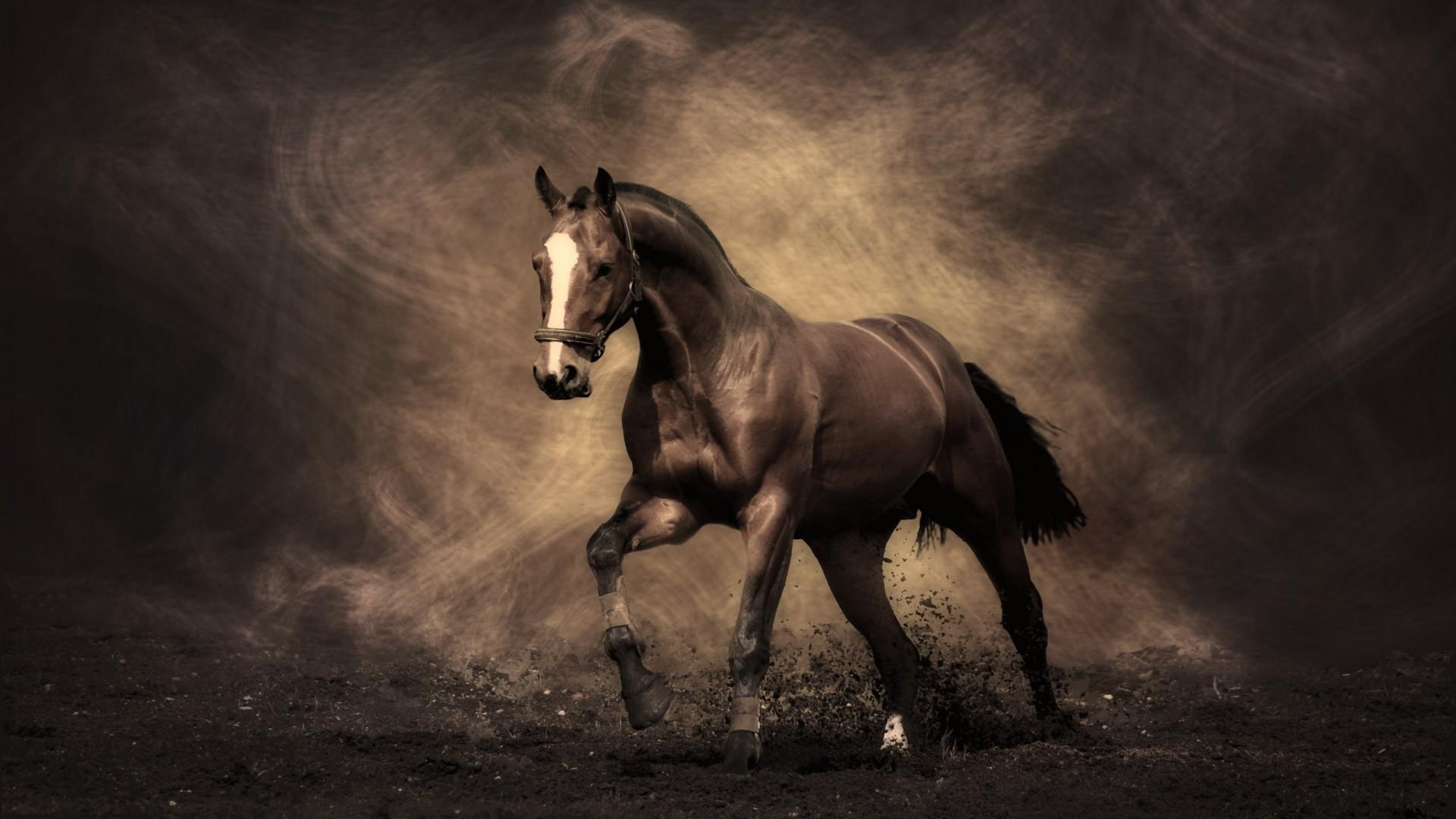 Arabian Racing Horse Desktop High Quality Wallpapers 1920x1080