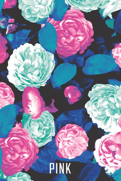Pink vs Wallpapers  WallpaperSafari