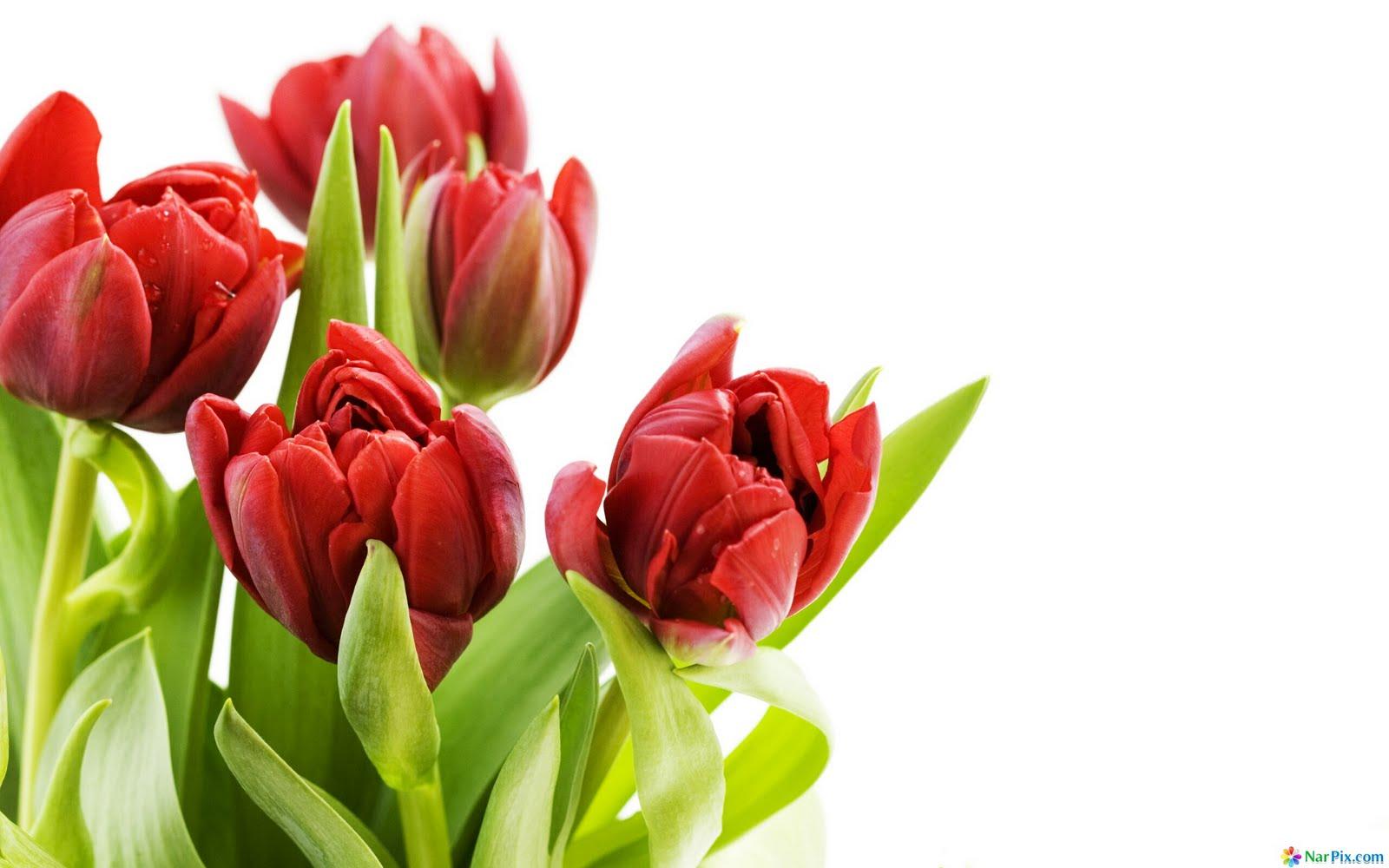 Full Hd Flowers Desktop Wallpaper 1600x1000 pixel Nature HD 1600x1000